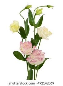 Beautiful pink Lisianthus flower bouquet isolated on white background