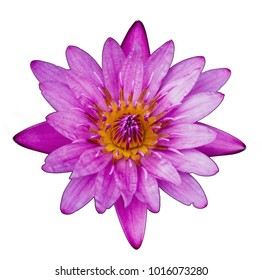 beautiful pink lotus flower isolated on white background. Top view.