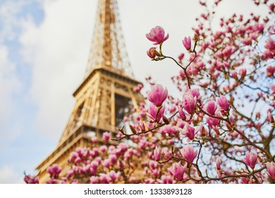 Beautiful pink magnolia in full bloom near the Eiffel tower in Paris, France