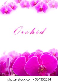 Beautiful Pink orchid flower arranged as a card with copy space.