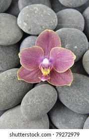 beautiful pink orchid flower on gray pebbles