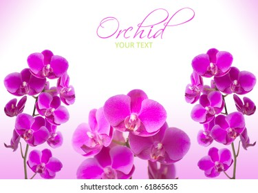 beautiful pink orchid flowers with sample text on white background