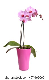 Beautiful pink orchid in the pot isolated on white