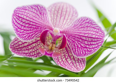 beautiful pink orchid with white stones on a harmony scene