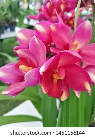 Beautiful pink orchids flowers and leave background