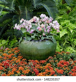 Beautiful pink orchids growing in a pot in tropical Thailand