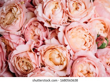 Beautiful pink and peach Juliet flowers texture, close up view
