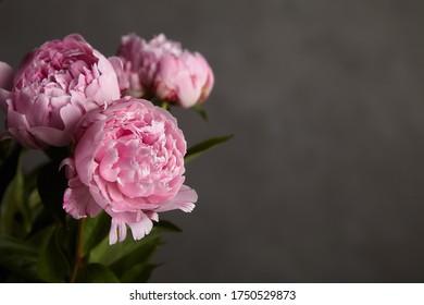 beautiful pink peony close up