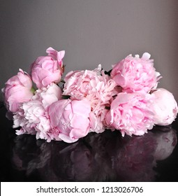 Beautiful pink peony flowers  in full bloom, close up, dark background