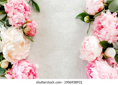 Beautiful pink peony flowers on gray stone table with copy space for your text. Flat style, top view