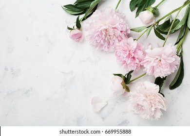 Beautiful pink peony flowers on white table with copy space for your text top view and flat lay style