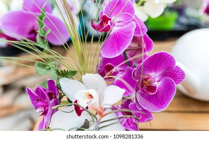 Beautiful pink phalaenopsis orchids cultivated in greenhouse