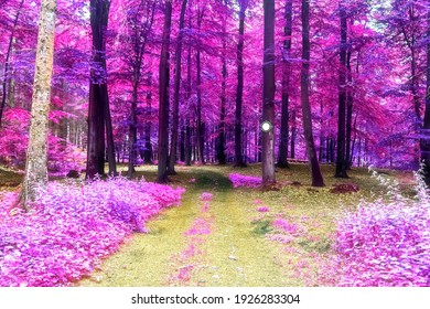 Beautiful pink and purple infrared panorama view into a forest landscape