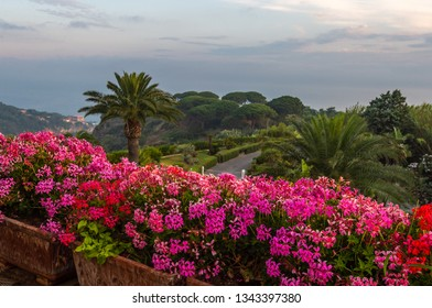 Beautiful pink and red flowers on a background of palm trees and green park. Ischia, Italy