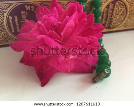 Beautiful Pink Rose Blooming Holy Quran Stock Photo Edit Now