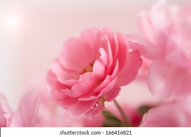 Beautiful pink rose with light and copy space