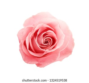 Beautiful pink rose on white background, top view. Perfect gift