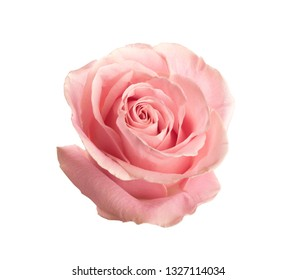 Beautiful pink rose on white background. Perfect gift