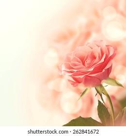 Beautiful Pink Rose. Retro vintage instagram filter.