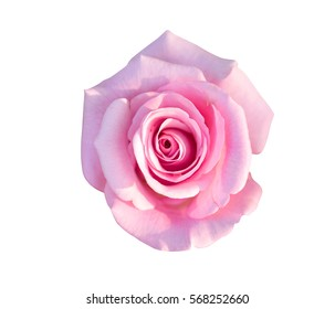 Beautiful pink rose with sun light isolated on white background with clipping path.