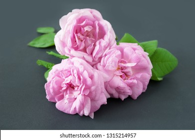 beautiful pink roses bunch on black background
