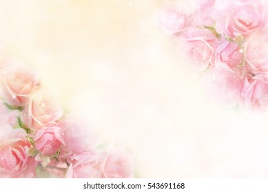 beautiful pink roses flower border soft background for valentine in pastel tone