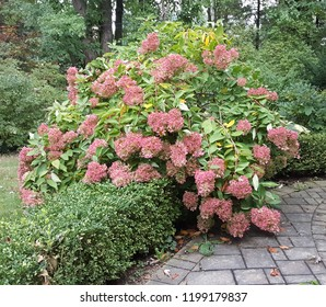 Beautiful pink sedum shrub with lush trees and stone pathway.