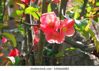 Beautiful pink spring flowers - summer background