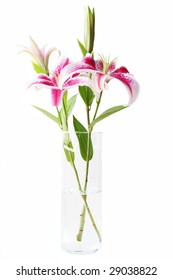Beautiful pink stargazer lilies in vase on white background.