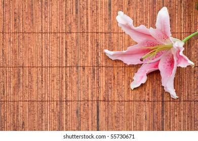 Beautiful pink stargazer lily (Lilium Stargazer) on bamboo mat with waterdrops