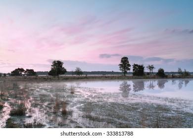 beautiful pink sunrise on swamp, Kampina, Netherlands
