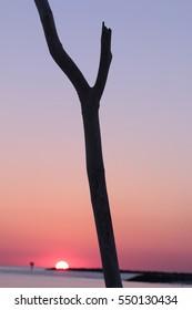 beautiful pink sunset on orange beach alabama with tree in foreground