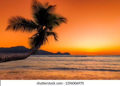 Beautiful pink sunset over the sea with coco palm on the beach in Jamaica Caribbean island
