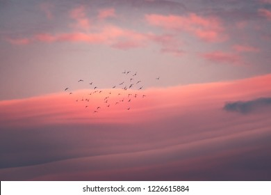 Beautiful pink sunset, silhouette of a flock of birds migrates to warm lands over amazing pink sky background, сonceptual photo of freedom