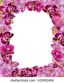 Beautiful Pink and Violet Orchids Border for Greeting Card. Lovely Flower Frame with Blank Space for Text