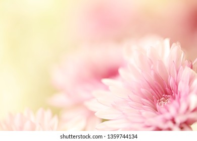 Beautiful pink and white flowers with a blurred yellow background.