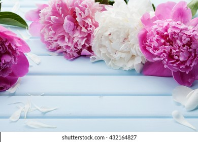 Beautiful pink and white peony flowers on blue vintage background with copy space for your text or design