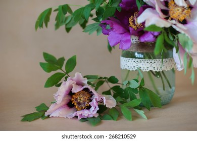 Beautiful pink and white wood peonies in a decorative vase on a brown background
