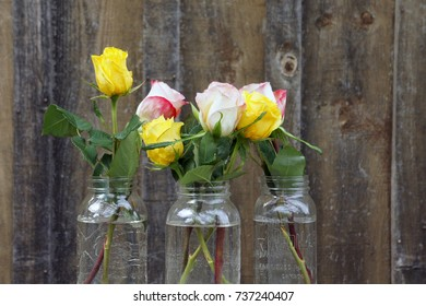 Beautiful Pink and Yellow Roses in Three Glass Jars Against a Blurry Rustic Wooden Wall Background