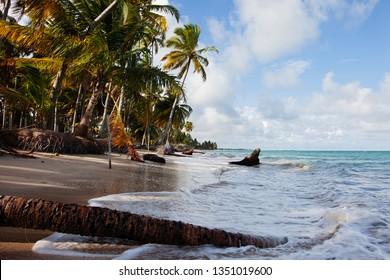 A beautiful place called Maragogi, Alagoas State, Brazil. A beach called Xareu (praia do xareu). Fantastic landscape, great beach with clear water. Paradise beach, palm tree, blue sky with few clouds.