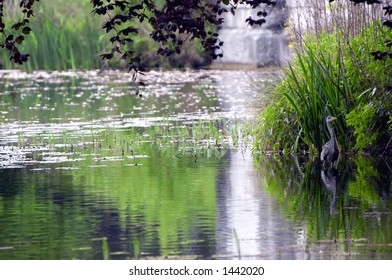 Beautiful place in a park with a heron looking for fish