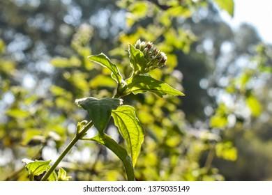 Beautiful Plant By Ashish