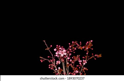 A beautiful plant in darkness