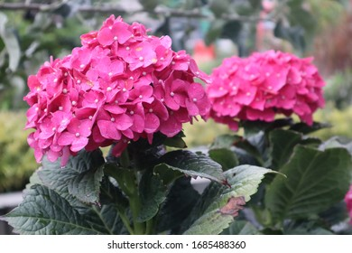 Beautiful plant flower in the garden