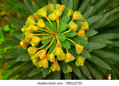 Beautiful plant like a sun