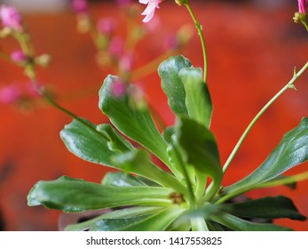 Beautiful plant and pink flower for background.
