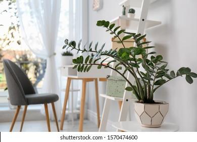 Beautiful plant in stylish room interior. Home design idea