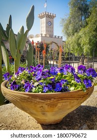 Beautiful plant vase with purple flowers in Mount Tabor, Israel. Amazing tower and view