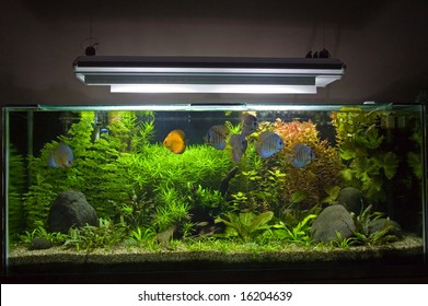 A beautiful planted tropical freshwater aquarium with Discus Fish.