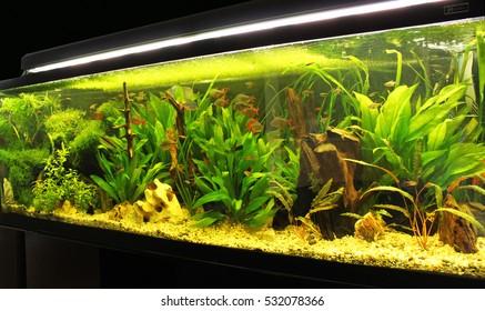 beautiful planted tropical freshwater aquarium